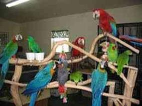 Parrots of various species available for good and