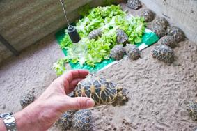 Cb Healthy Tortoises And Turtles