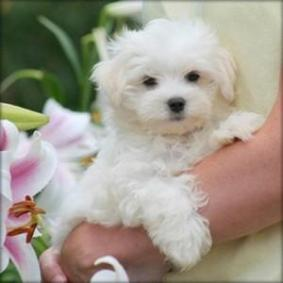 Alberta : Dogs & Puppies nearby sale Listings - Classified