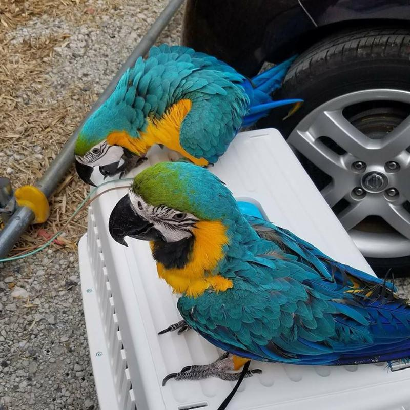 Tamil Nadu Parrots And Fertile Parrot Eggs For Sale Macaws